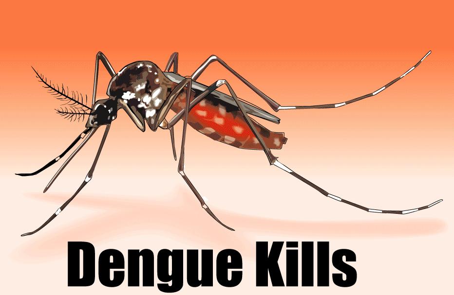 Due casi di dengue in città: disinfestazioni notturne contro